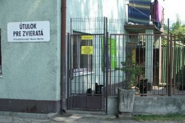 Psi majú v martinskom útulku voľnosť, nie sú v klietkach.