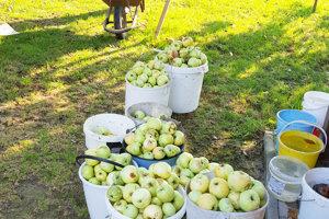 Tento rok sa záhradkári tešia z bohatej úrody.