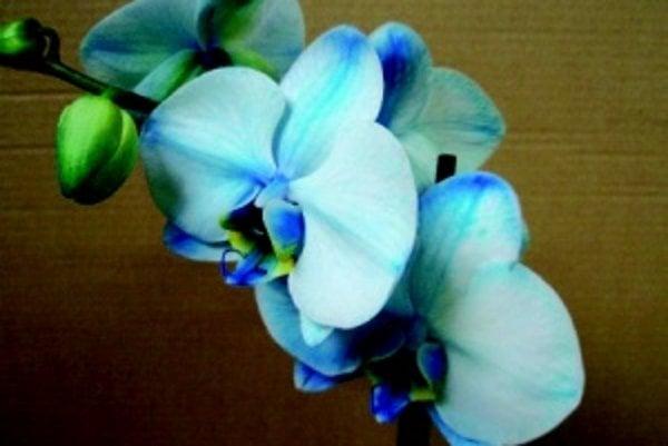 Orchidey. Nájdete ich v botanickej záhrade.
