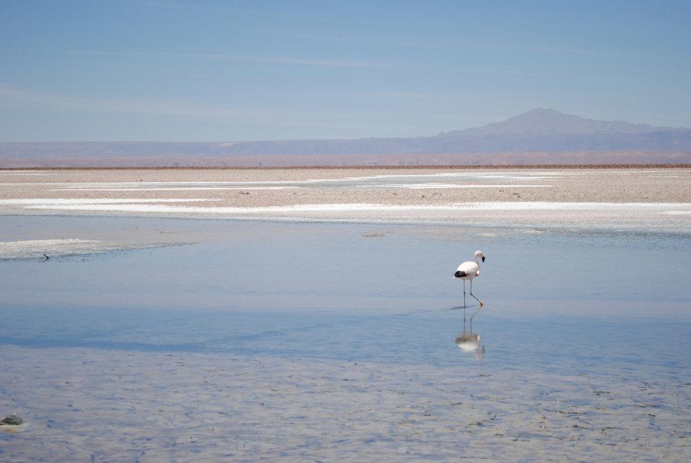 Soľné jazero, púšť Atacama