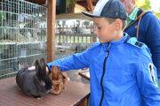 Hebká a lesklá srsť králikov saténových je ich charakteristickým znakom.