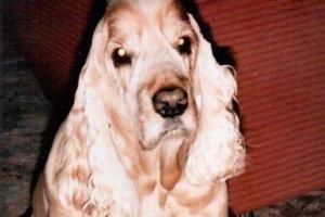 Prvá kniha M. Vrkoslavovej bola spomienkou na psíka Gastona, ktorý rodine zachránil život.