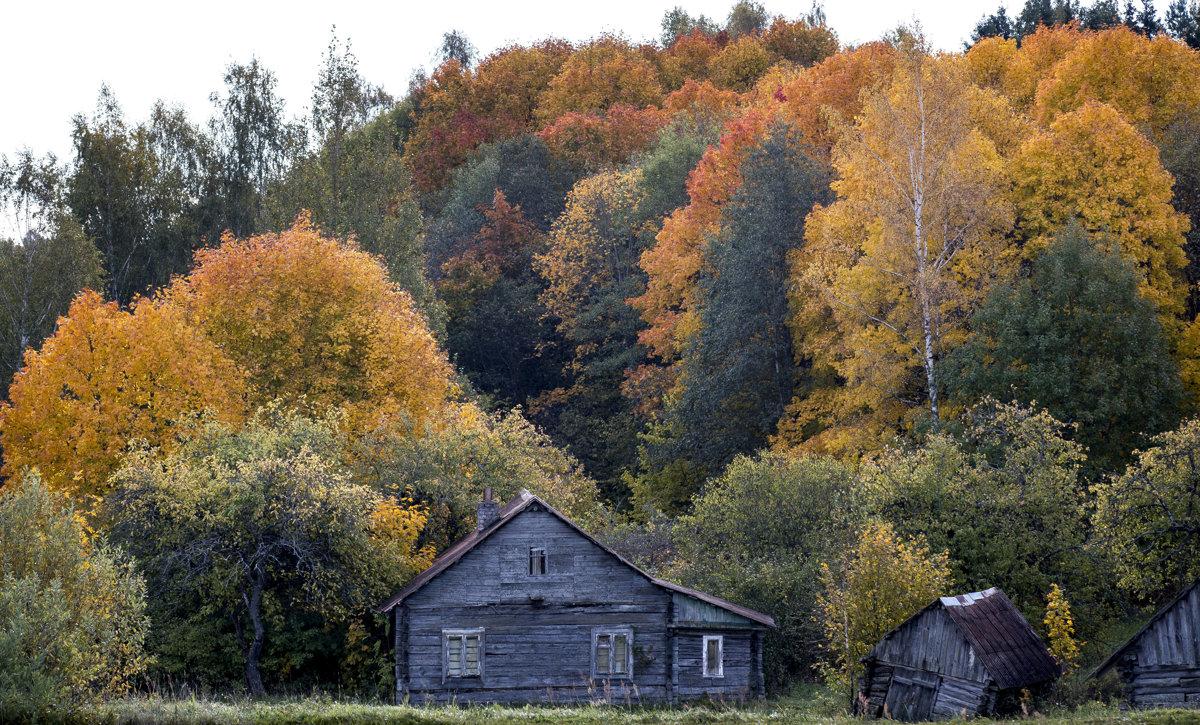553e501d8 Na jeseň sa v listoch prestane vytvárať zelené farbivo. na povrch sa tak  dostanú skryté