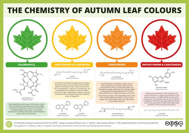 Chémia za jesennými farbami listov. Kliknite pre zväčšenie.)