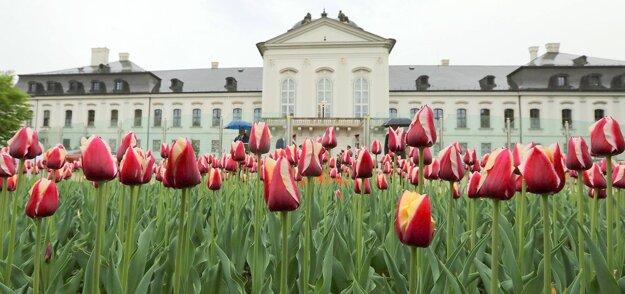Zakvitnuté tulipány v záhrade prezidentského paláca.