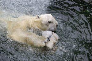 Ľadový medveď Tongki sa dožil 24 rokov.
