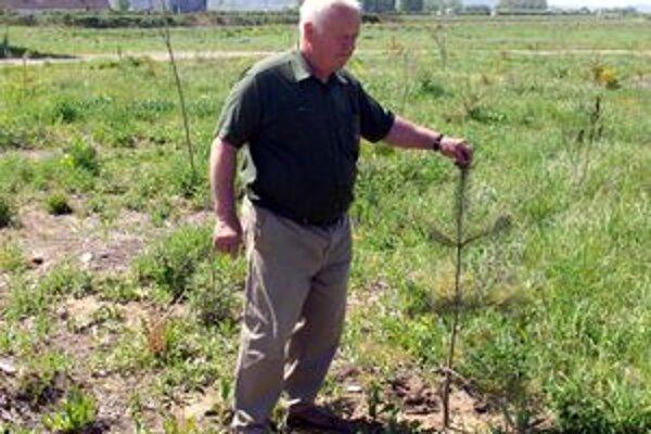 Jaroslav Melicher ukazuje vysadené stromčeky.