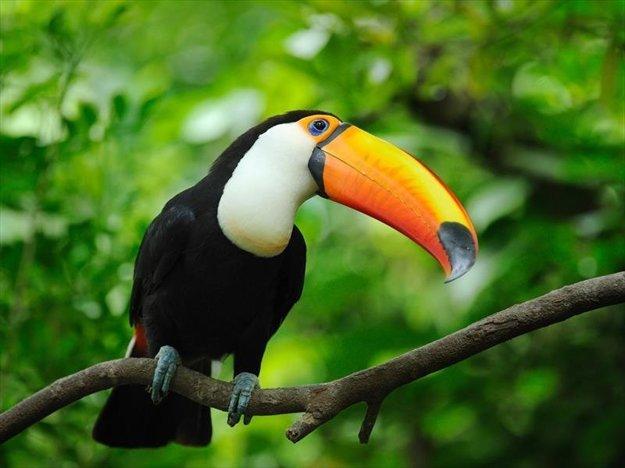 Panama má bohatú exotickú faunu a flóru.
