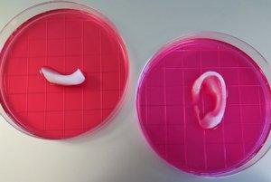 Časť čeľuste a ušná chrupavka z 3D tlačiarne.