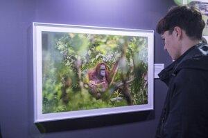 Návštevník pozerá na víťaznú snímku Czech Press Photo.