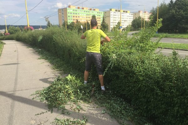 Boj samozvaného strihača so živým plotom sa mestskému podniku, ktorému Karaffa takpovediac liezol do kapusty, nepozdával.