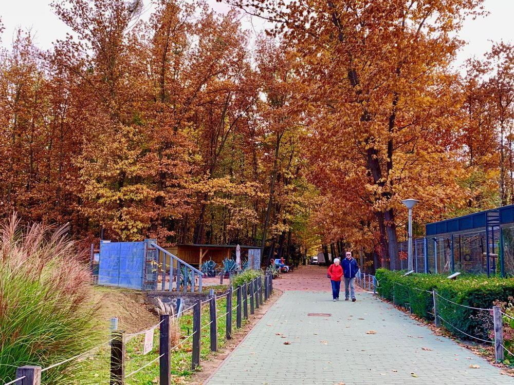 Prechádzka v ZOO = Prechádzka v lese