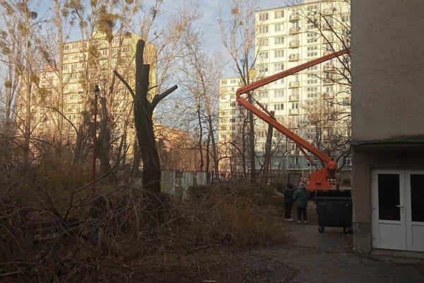 V areáli OA Watsonova pília stromy. Tie padali na miesta kadiaľ chodia študenti.