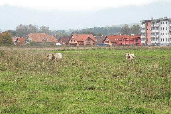 Opustený pozemok v Palúdzke, tu mali stáť nadštandardné byty.