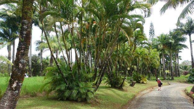 Vstup do Rajskej záhrady (Garden of Eden) na ostrove Maui