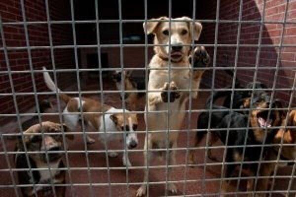 V Okoličnom budú mať psíky v karanténnej stanici lepšie podmienky.