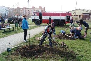 V Kalnej nad Hronom vysadili 300 stromov, ďalších 60 pribudlo v Bátovciach.