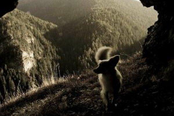 Zapojte sa do súťaže Domáci miláčik 2013. Vyplňte prihlasovací kupón z týždenníka MY Liptovské noviny a pošlite zaujímavú fotografiu vášho zvieratka.