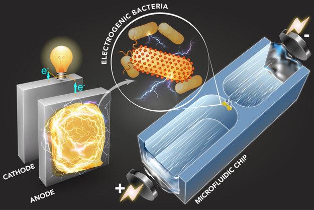 Nová technológia rýchlo roztriedi baktérie podľa toho, či vedia vyrábať elektrickú energiu.