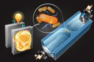 Nová technológia dokáže roztriediť baktérie podľa toho, či dokážu vyrábať elektrickú energiu.