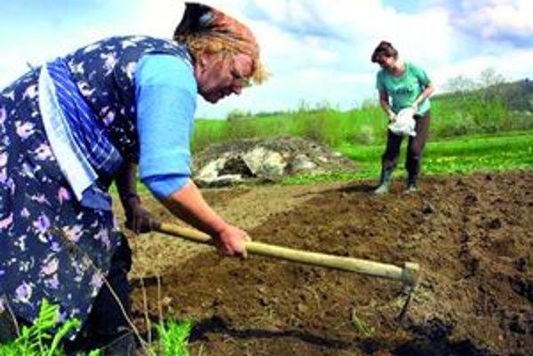 Čoraz menej ľudí v Liptove pestuje zemiaky na svojich poliach či v záhradách.