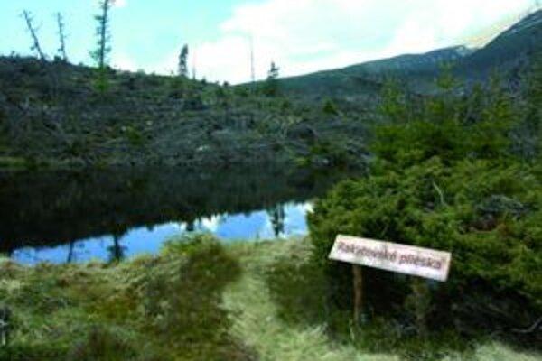 Okolo Rakytovských pliesok sa územie s popadaným suchým drevom začína zelenať.
