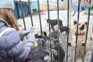 V útulku pri Košiciach je približne 200 psov a ďalších 80 až 90 v dočasnej opatere.