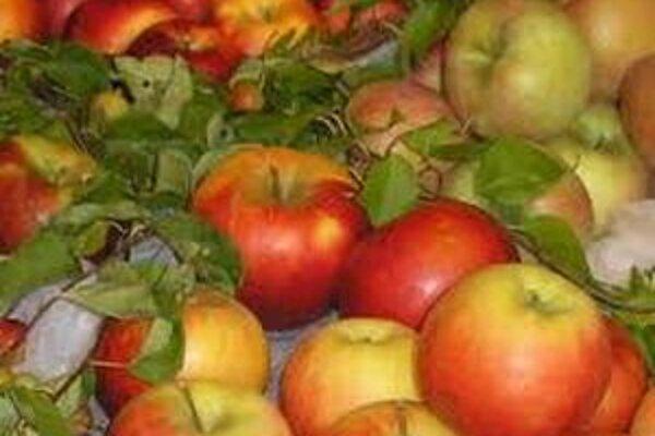 Aktivity Týždňa proti rakovine aj v Liptovskom Mikuláši vyvrcholia tradičným Dňom jabĺk v piatok 21. októbra.