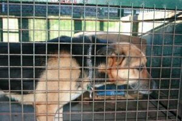 Zvieratá umiestnené v karanténnej stanci sú najmä cez zimu odkázané na pomoc aspoň vo forme dočasnej starostlivosti.