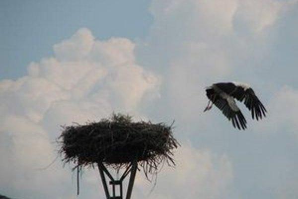 Online prenos hniezda bociana môžu ľudia sledovať na stránke kukaj.sk