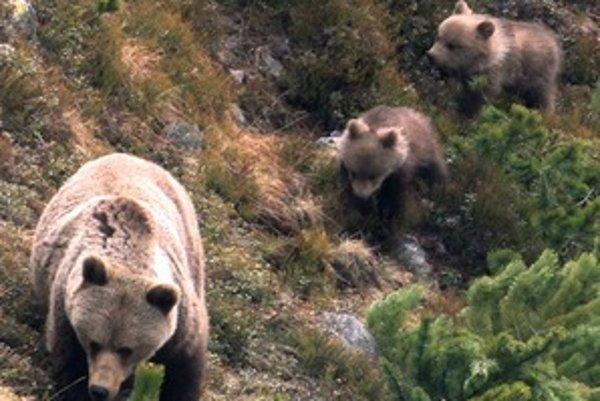 Ani stretnutie s medvedicou a jej mláďatami nemusí byť nebezpečné, hovorí Erik Baláž.