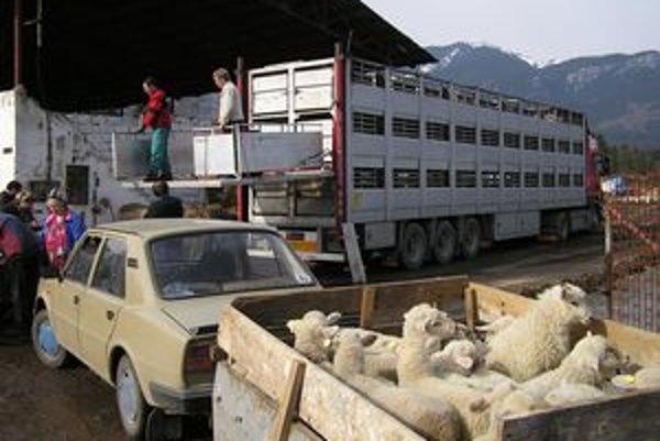 V Jalovci do kamiónu nakladali jahňatá z veľkochovov aj od drobnochovateľov z okolia.