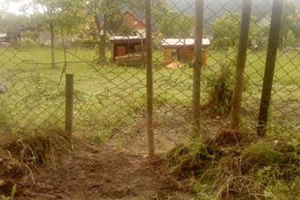 Medvede narobili paseku. Podhrabali sa pod plot a zničili úle.