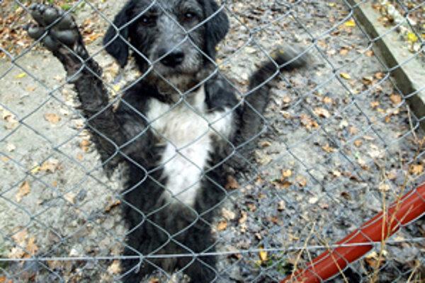 Svedkovia videli, ako zamestnanec útulku obchoduje s krmivom pre psov.
