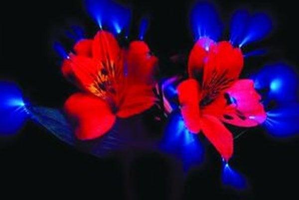 Kirlianova fotografia kvetu.