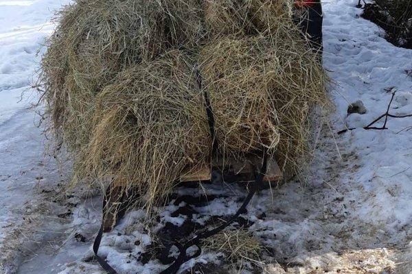 Táto zima bola pre zver v kysuckých lesoch mimoriadne náročná.