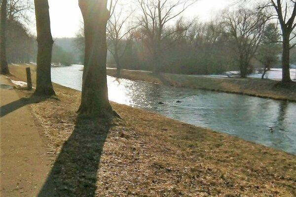 Martinčanke sa podarilo diviaky odfotiť, keď plávali riekou.