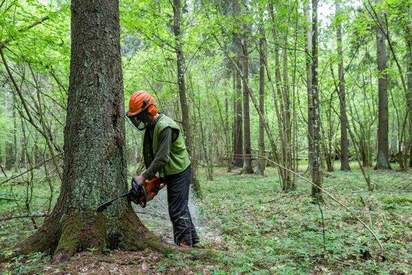 Odsúdili ju pre neoprávnený výrub 44 stromov duba zimného.
