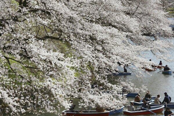 Ľudia v člnoch si užívajú krásu kvitnúcich skorých čerešní v parku Chidorigafuchi cisárskeho paláca v Tokiu.