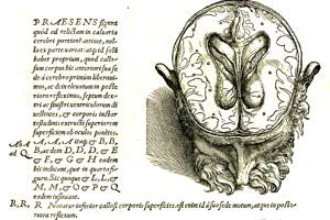 Vesalius zosadil z pomyselného trónu anatómie Galéna. Galén svoje predstavy o anatómii budoval do veľkej miery na základe pitiev zvierat a preto často neboli správne.