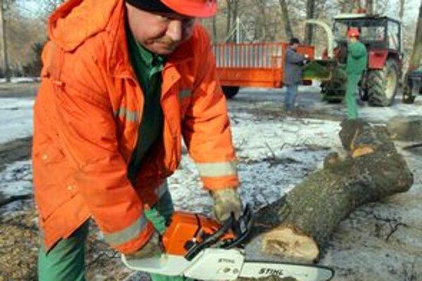 Topole, ktoré samospráva plánuje z fiľakovského parku odstrániť, sú choré.