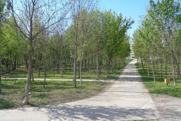 Lesný porast preriedili aareál vyčistili od odpadkov.