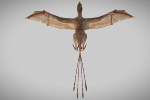 Drobný dinosaurus mal zrejme dlhé ornamentálne chvostové perie.