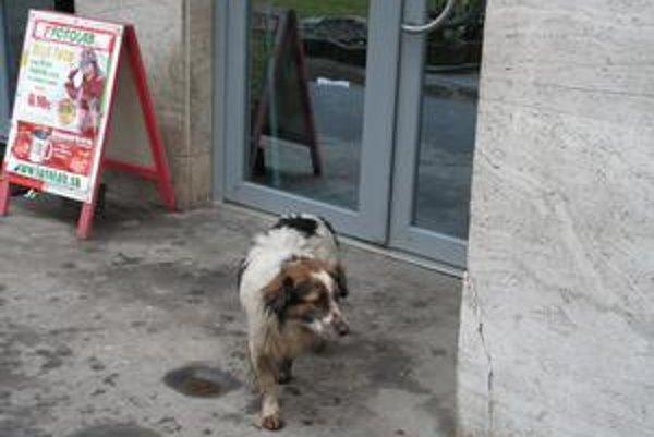 V Poltári uvažujú aj o odchytávaní a umiestnení túlavých psov do útulku prostredníctvom zmluvnej externej organizácie.