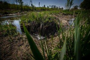 Prirodzené kaskádovité hrádze spomaľujú tok vody.