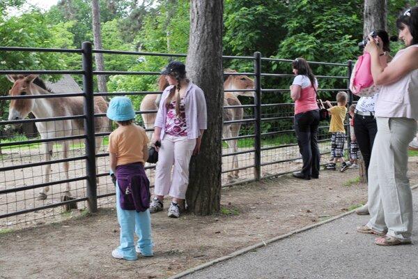 Zvieratá v bojnickej zoo by mali byť lepšie chránené pred hlukom z pyrotechniky.