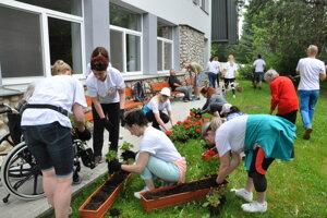Dom Seniorov v Tatranskej Štrbe budú odo dnes zdobiť nové muškáty. Do vysádzania sa zapájali nielen dobrovoľníci, ale aj samotní seniori.