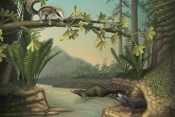 Agilodocodon scansorius (vľavo hore) a Docofossor brachydactylus (vprado dole).