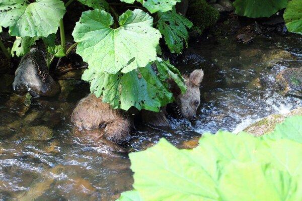 Smutný nález v potoku.