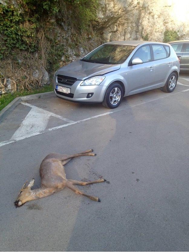 Z brala spadla na parkujúce auto aj srna.